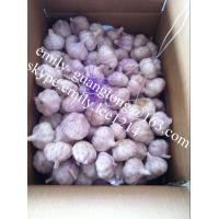 China Fresh Garlic/Normal White Garlic/China Garlic/Jinxiang Garlic on sale