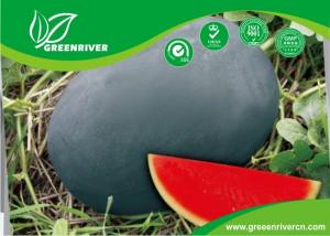 China Dark green Organic Watermelon Seeds with Sugar content 11.5% , Black on sale