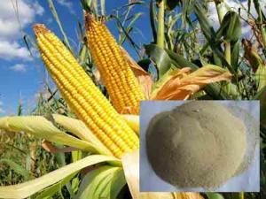 Quality Polvo quelatado aminoácido del manganeso for sale