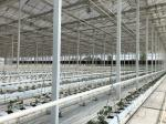 Large Size Commercial Hydroponic Greenhouse With Soilless Cultivation
