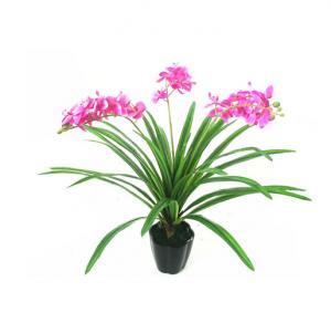 China flower,Rosa rugosa, Rose,violet,Matthiola incana, Commoon Stock, blueviolet, dark violet,m on sale