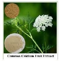 Factory Supply Organic common cnidium fruit herbsextract for sale