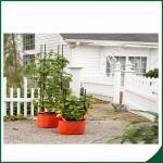 Orgánicos a prueba de mal tiempo crecen los bolsos, bolso del plantador del tomate con la función multi