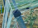 100% HDPE 4x50m Insect Mesh Netting For Greenhouse Nursery / Agricultural