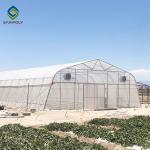 Agricultural Tunnel PE Film Greenhouse With Drip Irrigation System