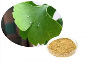 China Ginkgo Biloba Leaf Extract powder , Natural Plant Extracts Flavonoids Terpene Lactones 6% on sale