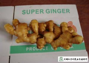 China 150 - 300 G / Per Fresh Yellow Ginger Sell To Supermarket And Wholesaler on sale