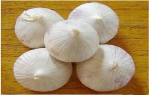 China Clean Organic Fresh Nutritional Value Garlic 3p - 5p Mesh Bag Contains Zinc on sale