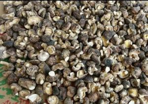 China Premium Quality Dried Shiitake Mushroom Price for Shiitake Mushrooms on sale