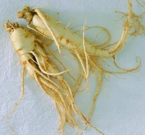 China panax ginseng root extract ginsenosides on sale