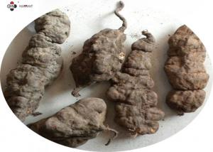 China Anti Hyperlipidemic Polygoni Mulitiflori Herb Extract Powder on sale