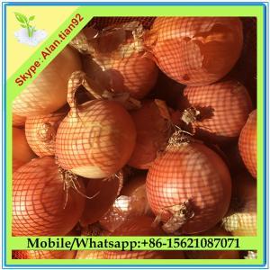China Importador fresco da cebola de Dubai on sale