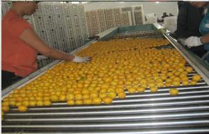 China Juicy Satsuma Fresh Mandarin Oranges Contains Limonene , Myrcene , Gamma-Terpinene on sale