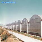 200 Micron Polyethylene Film Large Scale Multispan Greenhouse