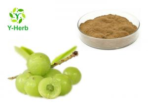 China Phyllanthus Emblica Herbal Extract Powder Gooseberry Amla Berry Fruit Extract Powder on sale