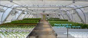 China small garden green house,Multispan Tunnel Greenhouse for Tomato Agricultural Green houses,fabric steel wire agriculture on sale