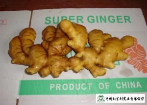 China Medicinal Value Organic Fresh Ginger , Chinese Fresh Young Ginger For Swelling on sale