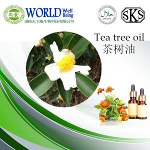 China 100%の純粋な有機性茶木オイル、性質の茶木の精油 on sale