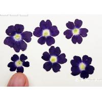 Latest Class A Verbena Dried Flower Gifts , Hanging Dried Flowers For DIY Christmas Card