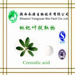 China Chinese herbal extract 100% Natural ingredient 10-30% Corosolic acid(Loquat Leaf Extract) on sale