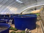 China 1000gallon Round large Open Top Aquaculture plastic fish farm tank for shrimp and fish wholesale