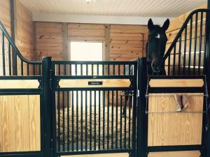 China Amazing Horse Stable Partitions / Steel Horse Stalls With Single Sliding Gate on sale