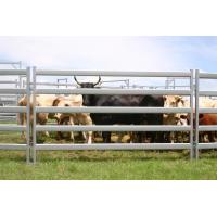 China Used Corral Panels,Used Horse Fence Panels,Galvanized Livestock Metal Fence Panels on sale