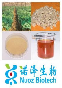 China Ginseng Root Extract on sale