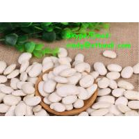 China White kidney bean WHITE KIDNEY BEAN Chinese supplier High quality cindy@xtlandi.com on sale
