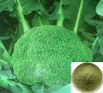 extrato dos brócolos do extrato da planta