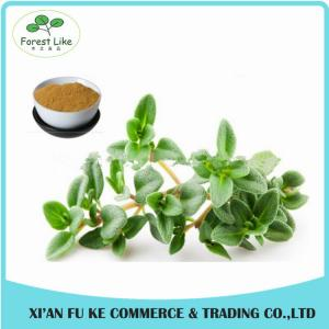 China New Design Spices Product Antibacterial Effect Dry Thyme Leaf Extract on sale