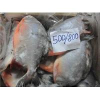 Wholesale Price Frozen Fish Food Whole Red Pomfret from China.