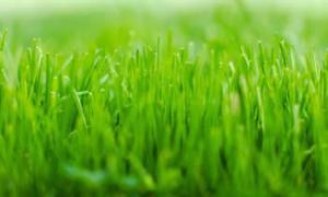 China Lawn Service Austin With Lawn Fertilization / Lawn Aeration on sale