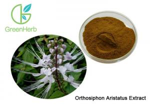 China High Quality Natural Orthosiphon Aristatus Extract Powder 10:1 on sale