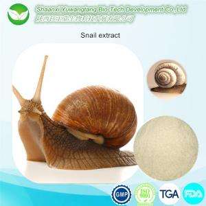 China Skin care Helix Aspersa Snail meat extract / Snail Protease / Snailagglutinin on sale