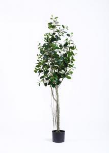 China Lush Leaves 6 Ft Artificial Ficus Tree , Fake Fiddle Leaf Fig Tree Delightful Impression on sale
