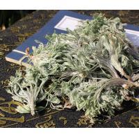 Capillary Wormwood Herb oriental wormwood capillary Artemisia capillaris Thunb whole plant Yin Chen Hao