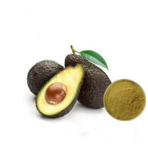 China Improve Brain Avocado Fruit Extract Brown Yellow Color Powder HPLC Test on sale