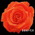 flor preservada R0106, flor, presente