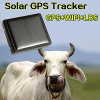 Mini Solar Animal Gps Tracker , Real Time Animal Tracking Device For Cattle Horse Camel
