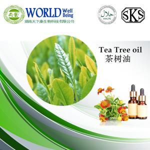 China Pure tea tree essential oil on sale