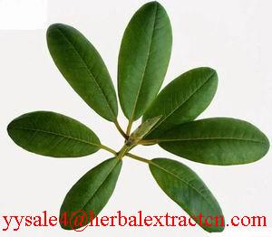 China Corosolic acid(Loquat Leaf Extract) on sale