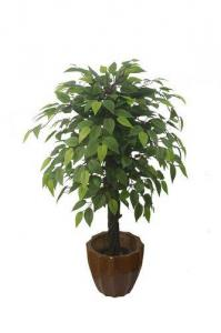 China sell ficus tree on sale