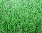 China Natural Football Artificial Grass With 60mm Height For School And Training Centre wholesale