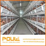 H Type Layer Chicken Cage with Feeding Drinking and Ventilation System