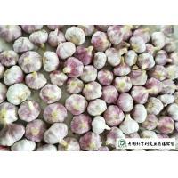Healthy Fresh Organic Garlic , Natural Garlic Liliaceous Vegetable Type