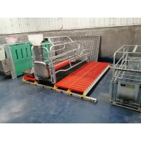 China Steel Pig Farrowing Crate on sale