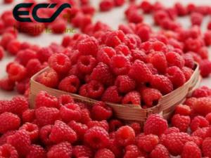 China Antioxidant Organic Food Ingredients Dehydrated Raspberry Powder For Reduce Wrinkles on sale