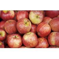 Smooth Tastey Organic Fuji Apple Containing Calcium , Vitamin With No Pollution