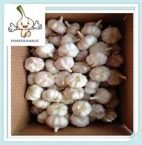China 2015 bulk shandong pure white garlic frozen fruits newest wholesale fresh garlics on sale